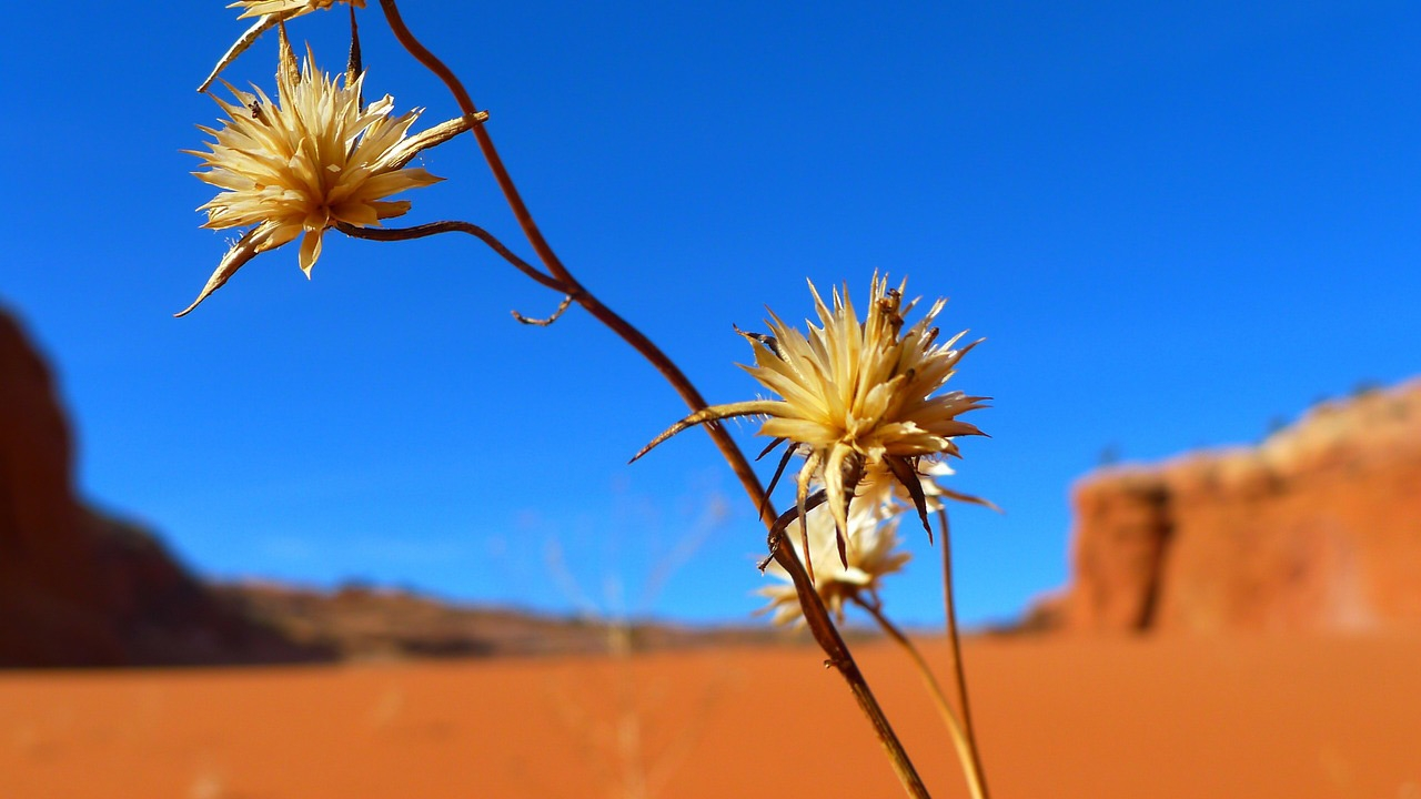 Desert Flower Landscape Mountains Nature Outside